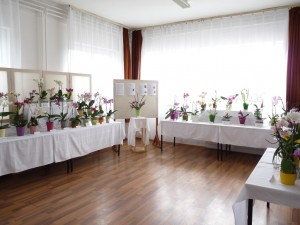 Orchidea kiállítás+Kata 011
